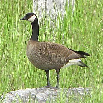Birdfinders Birdwatching Holidays Alaska