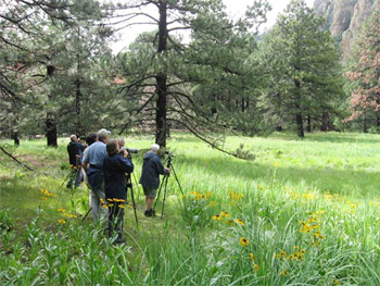 Birdfinders in the Chiricahua Mountains