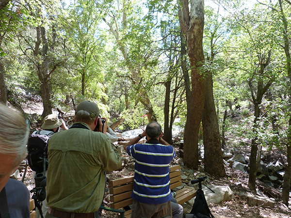 Birdfinders at Ramsey Canyon