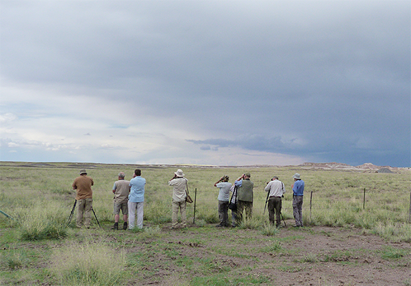 Birdfinders watching Scaled Quail