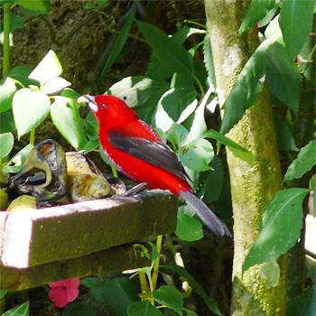 Birdfinders Birdwatching Holidays Brazil