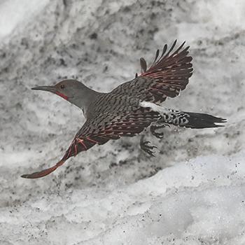 Birdfinders Birdwatching Holidays Colorado And Wyoming