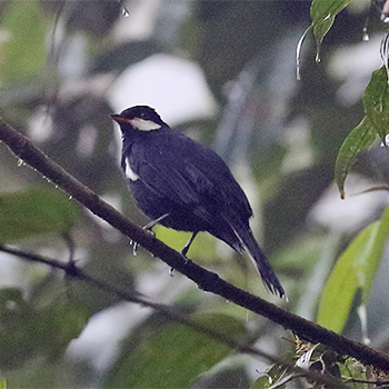 Black Solitaire
