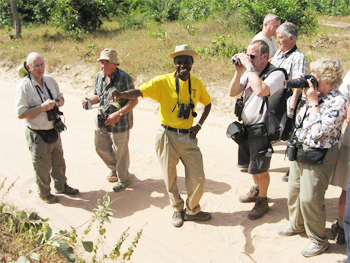 Birdfinders Birdwatching Holidays The Gambia