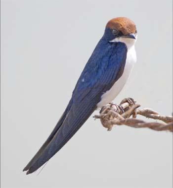 Birdfinders Birdwatching Holidays The Gambia