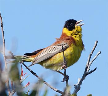 Birdfinders Birdwatching Holidays Greece Lesvos