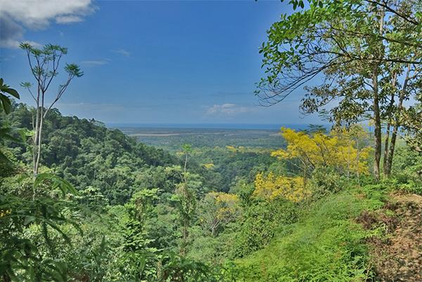 Birdfinders Birdwatching Holidays Honduras Pico Bonito