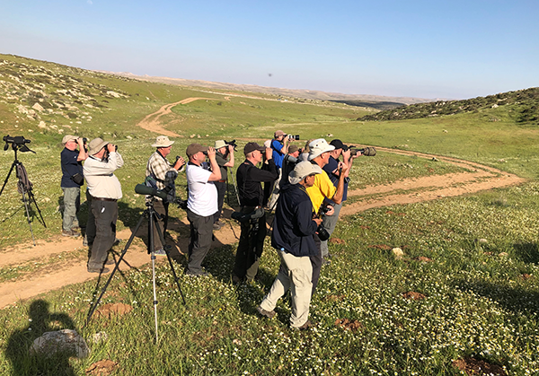 Birdfinders' group watching Cretzschmar's Bunting