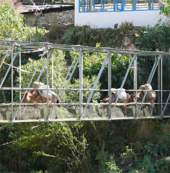 One of the many donkey trains seen going up and down the mountain