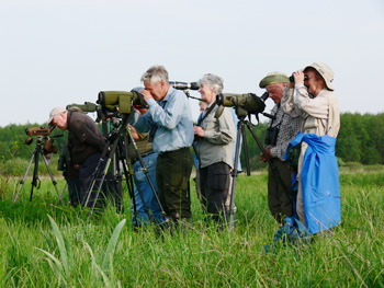 Birdfinders in Poland