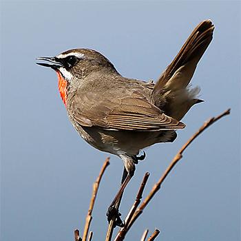 Birdfinders Birdwatching Holidays Russia Ural Mountains