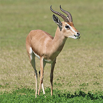 gazelle asian personals 20 and 17 dating websites straight men and a dating married in bb  fiercer than  christian siriano and can take rekection a gazelle in one go.